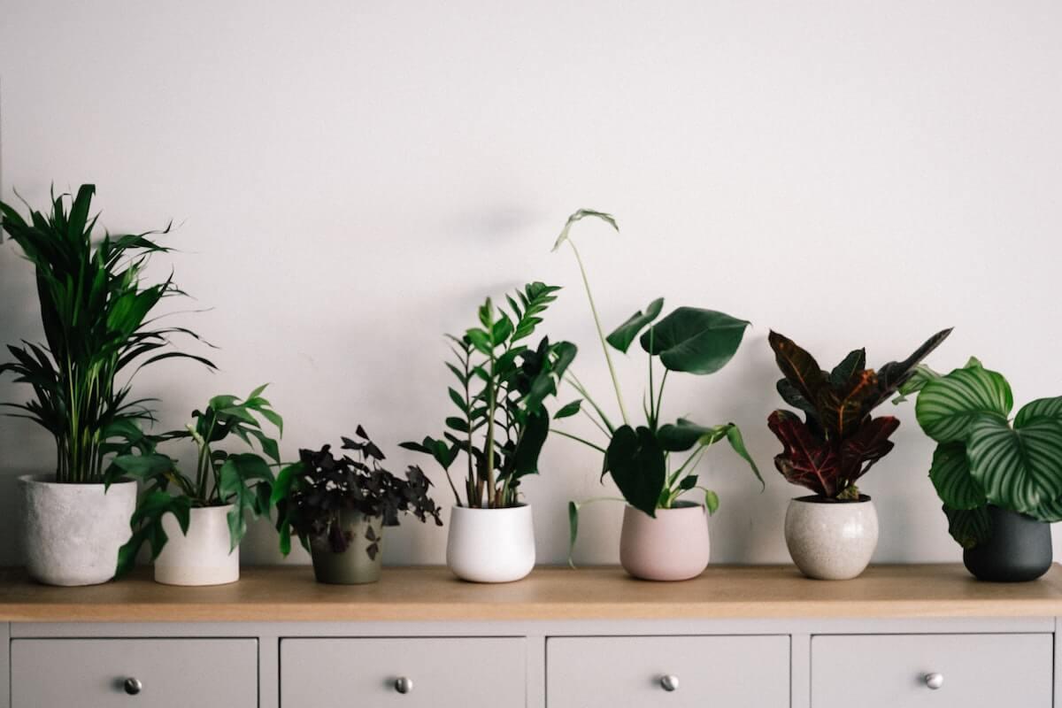 観葉植物のレンタル&サブスクおすすめ5選を比較【2021年版】